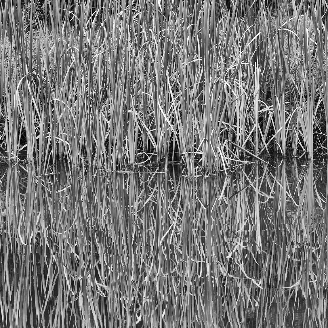 05 Reflecting Marsh