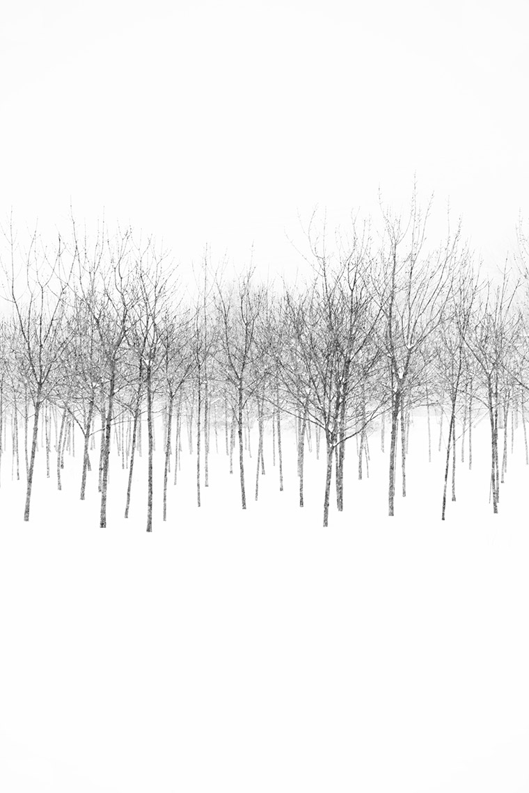 28 Dancing Bare Trees